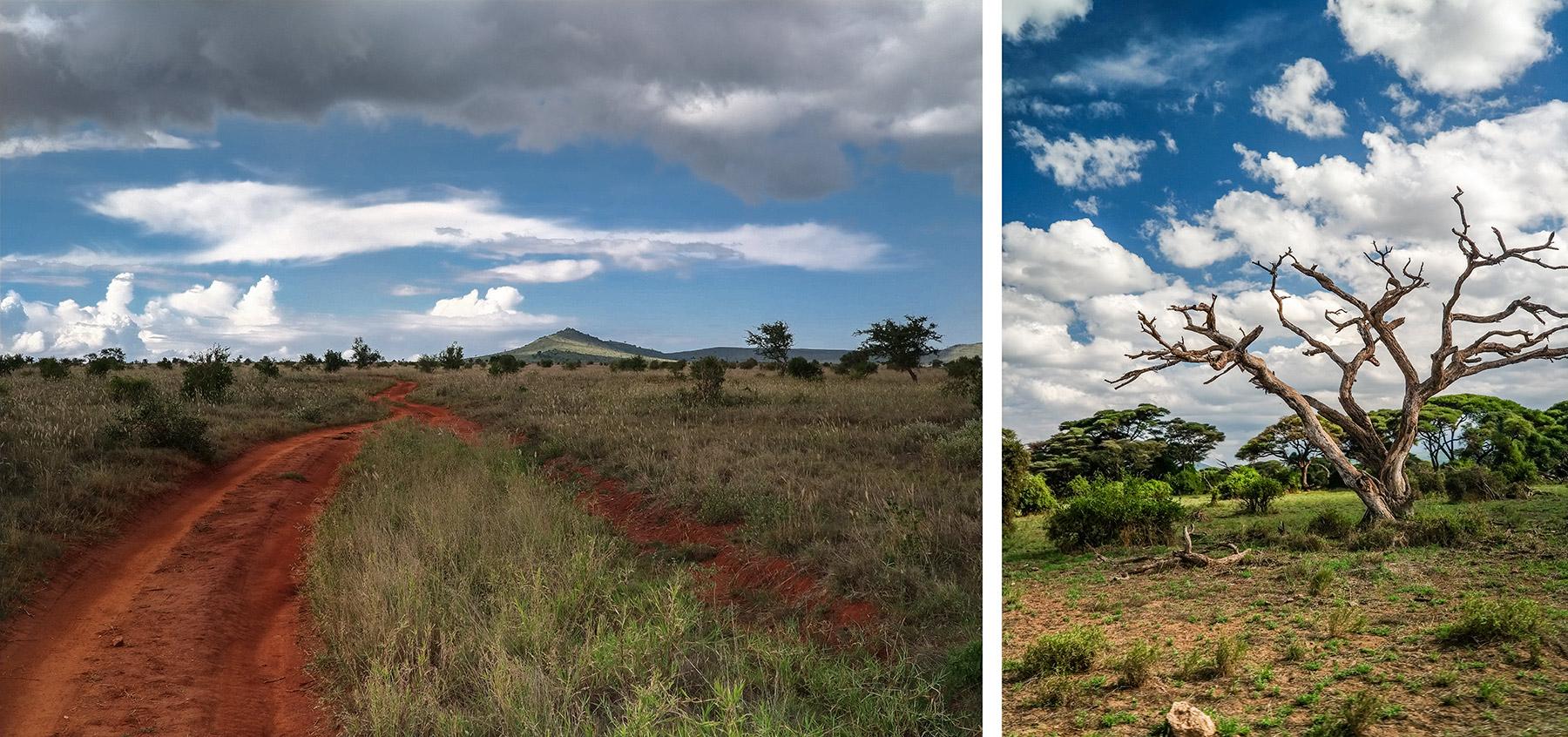 Safari w Kenii fotografia mobilna oderwany