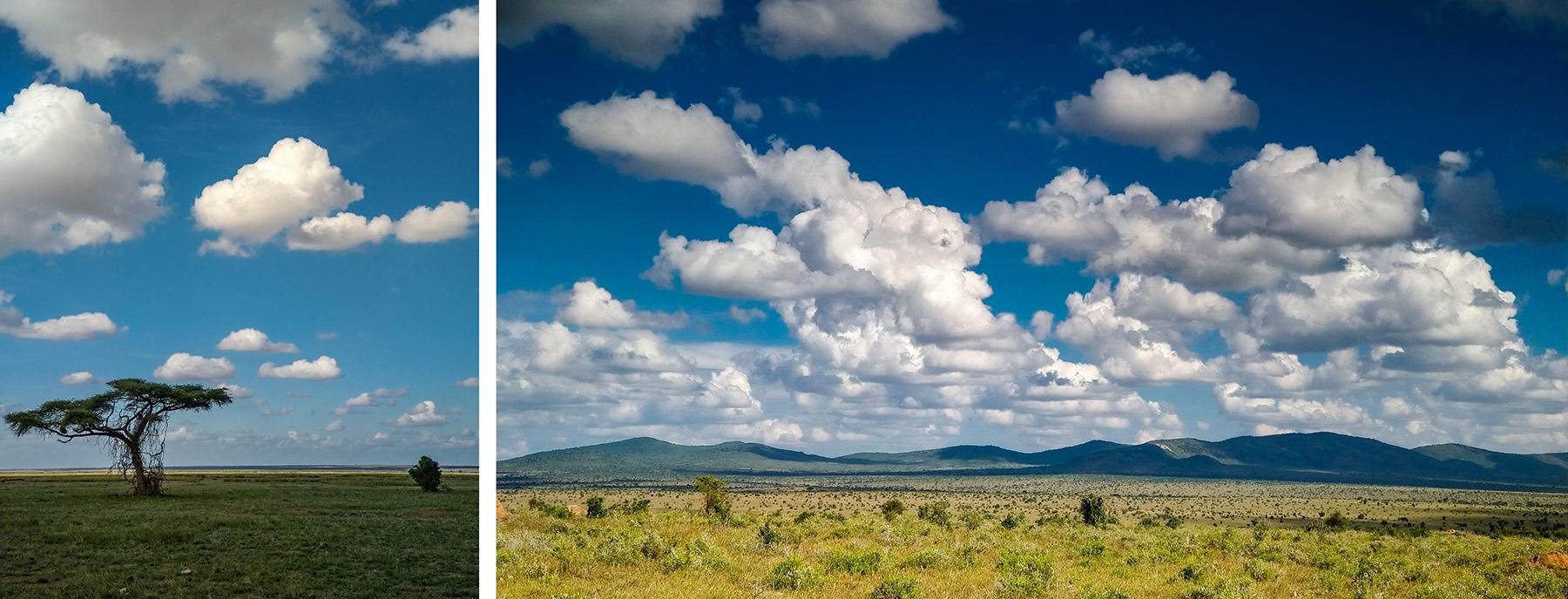 Safari w Kenii zdjęcia zrobione smartfonem oderwany