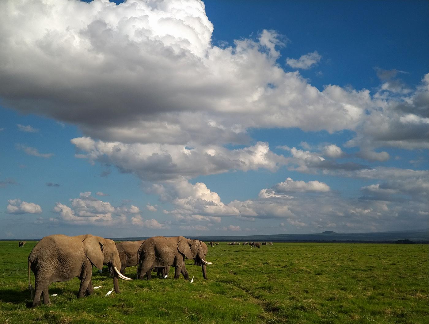 Safari w Kenii jak fotografować smartfonem oderwany