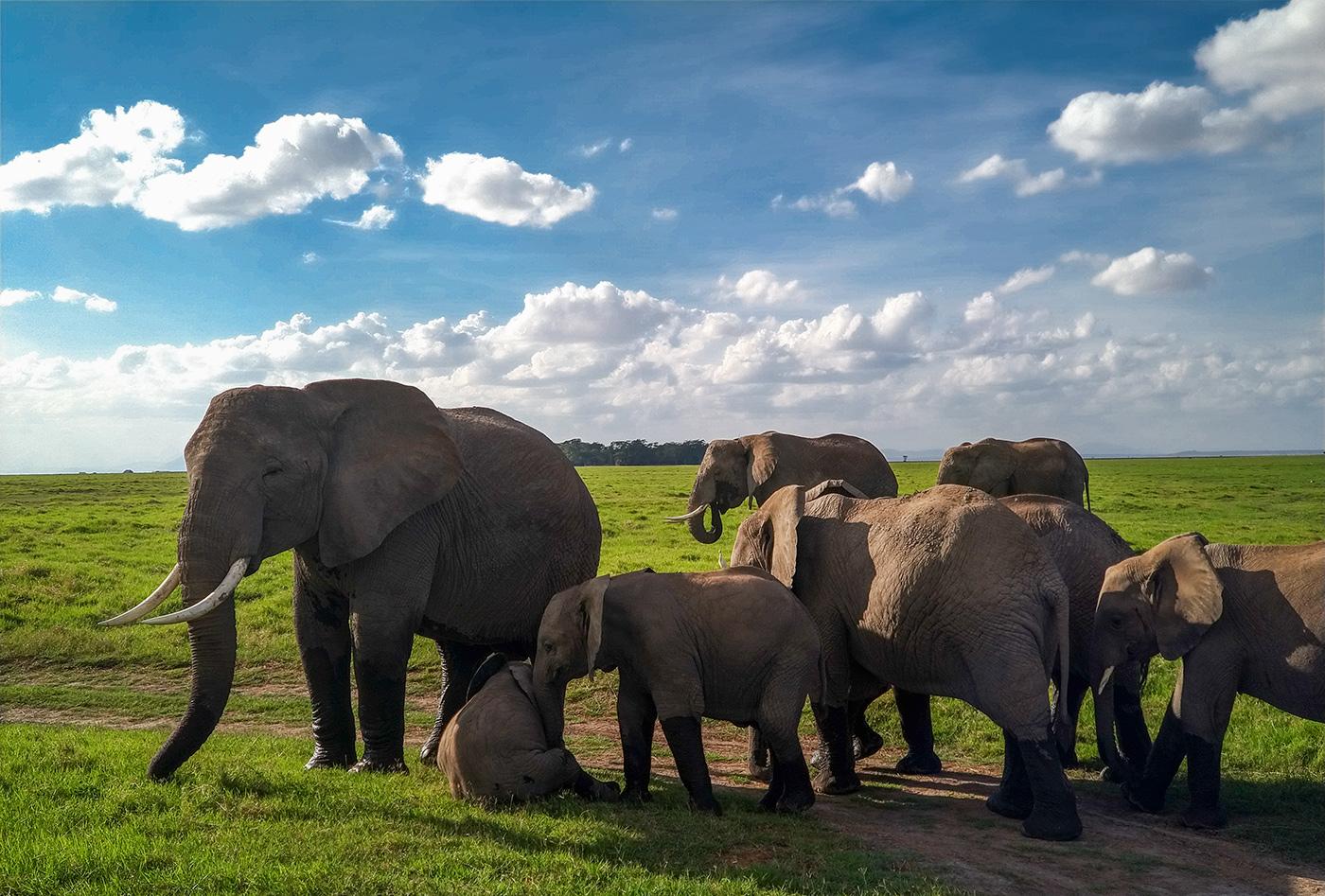 Słonie- Safari-w-Kenii- jak-fotografowac-smartfonem-oderwany
